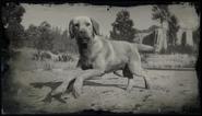 Rufus (Compendium)