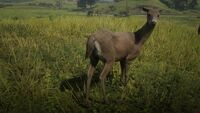 Whitetail Deer (Photo Mode)