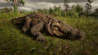Alligator at the Kamassa River