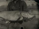 Legendary Channel Catfish