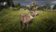 Buck in Game