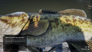 RDR2 - Legendary Smallmouth Bass 02