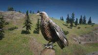 Bald Eagle near Riggs Station