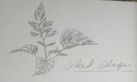 Red Sage drawing by Arthur