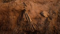Cholla Springs High Desert Bone Location
