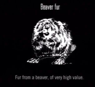 Animals Beaver Fur.jpg