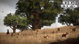 Deers and Bucks.jpg