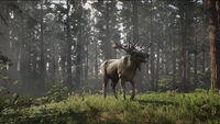 Legendary Ruddy Moose getting attacked
