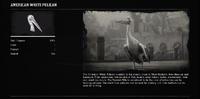 PelicanWhiteProfileRDR2