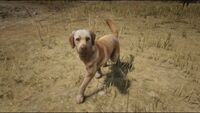 Rufus (Photo Mode)
