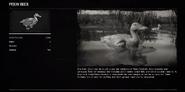 DuckPekinProfileRDR2