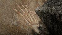 Grizzlies Calumet Ravine Bone Location