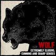 Wildlife wolf