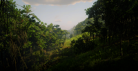 Jungles in Guarma 13