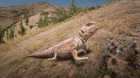 Desert Iguana off-bounds