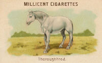 Horses Card Throroughbred