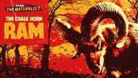 The Chalk Horn Ram rdo promo