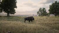 Bison in Hennigan's Stead