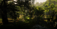 Jungles in Guarma 3