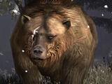 Brumas the Bear