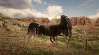 Western Turkey Vulture flying