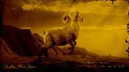 Mouflon à cornes de craie légendaire