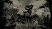 Mouflon des montagnes Rocheuses (mâle)