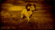 Mouflon à cornes de gabbro légendaire