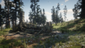 Bearclaw Camp04