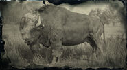 Bison légendaire Tatanka