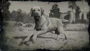 Rufus