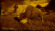 Bison Tatanka légendaire