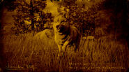 Loup de pierre de lune légendaire