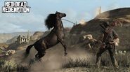 Cheval noir01