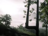 Arbre balise (III)