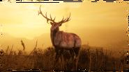 La Naturaliste08