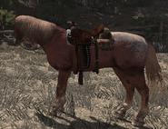 Painted Quarter Horse02