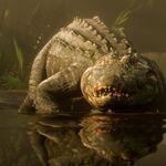 Alligator américain04.jpg