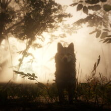 Loup des bois04.jpg