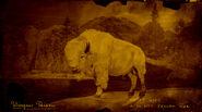 Bison Winyan légendaire