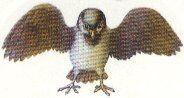 Queen Warbeak