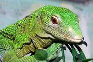 Monitor lizard.jpg