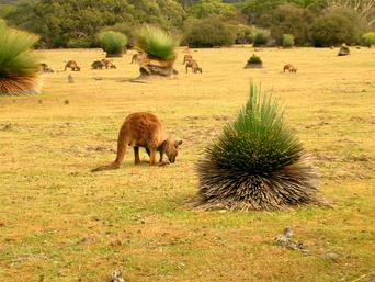 Australasia 2.png