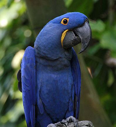 Ornitología