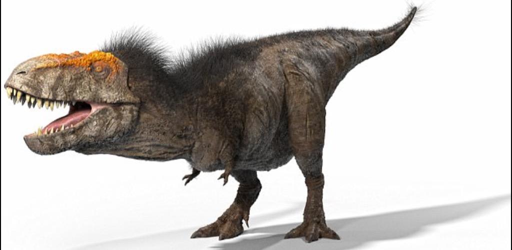 Tiranosaurio Rex Wiki Reino Animalia Fandom El tiranosaurio rex pesaba hasta 8 toneladas, 5. tiranosaurio rex wiki reino animalia