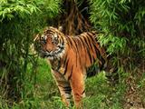 Indomalaya