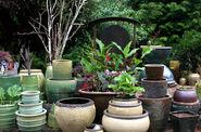 Lots-of-pots