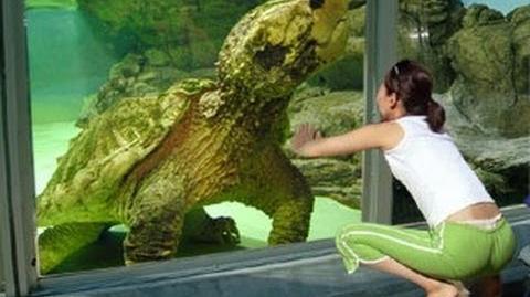 Monster Turtle!