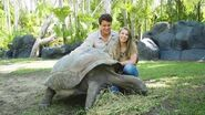 Adopt an Animal at Australia Zoo - Igloo the Tortoise-0