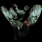 Chicken RE.NET icon